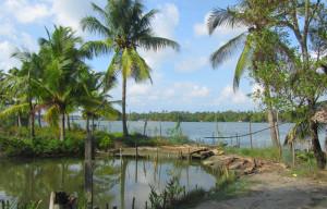 kumbalangi_ernakulam-Kerala-India